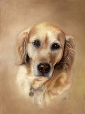 "Portraitmalerei Gertraud Hofegger ""Golden Retriever"""